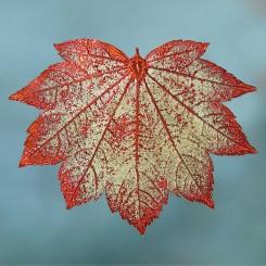 Esdoornblad-koperkleurig