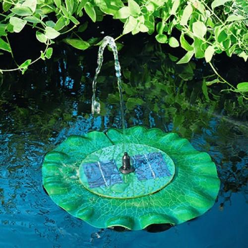 Fontein-waterlelie