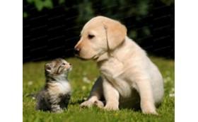 Huisdierenverzorging