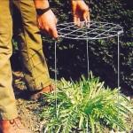 Aanpasbare plantensteun van 55 cm diameter