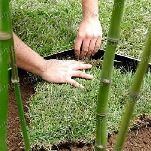 Afboording anti bamboe wortels