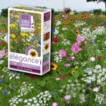 assortiment veldbloemen - elegantie