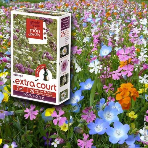 assortiment veldbloemen - lage hoogte