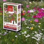 assortiment veldbloemen -