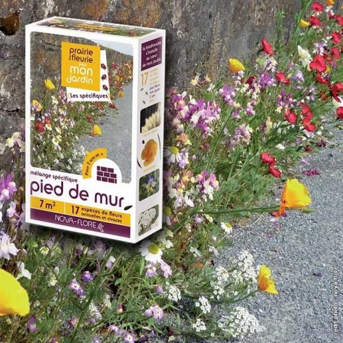 assortiment veldbloemen - voor aan een muurtje