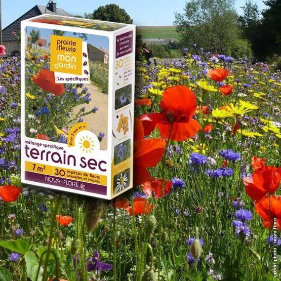 assortiment veldbloemen - voor droge grond