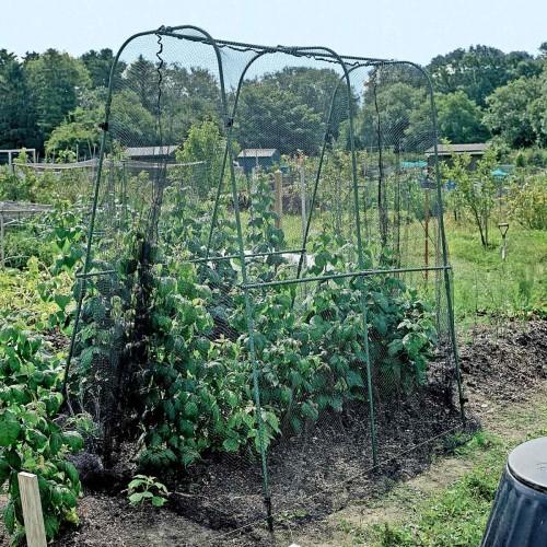 Beschermkooi voor groenten en fruit