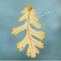 Eikenblad in goud - 24 karaat