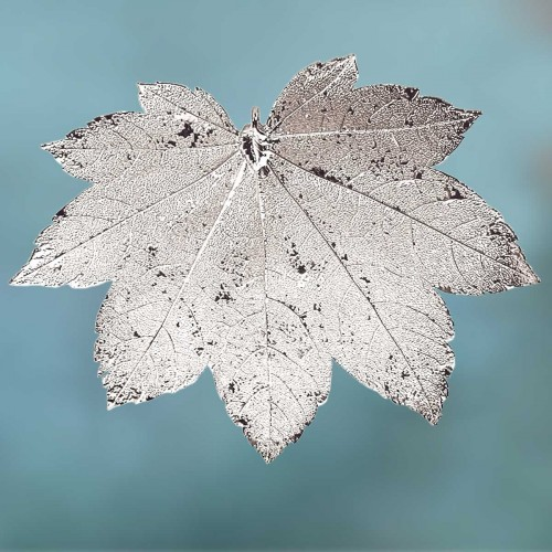 Esdoorn/Ahornblad in zilver