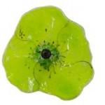 klaproos in glas - groen