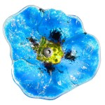 klaproos in glas - lichtblauw