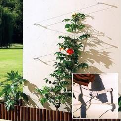 Opbindtouw voor klimplanten van 10 meter