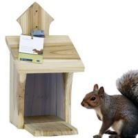 Voederplank eekhoorn