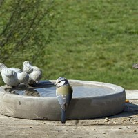 vogelbad in beton